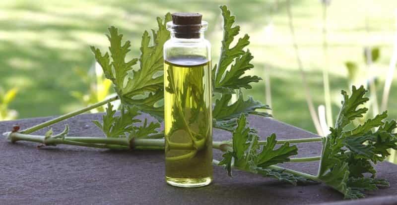 Herbal Skin Care Cosmetics